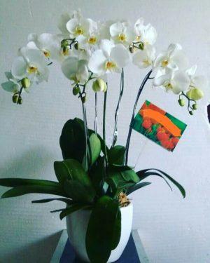 on sale 882bd e22ef Cinta Florist - cinta florist