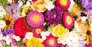 on sale 591b5 bd2db Cinta Florist - cinta florist